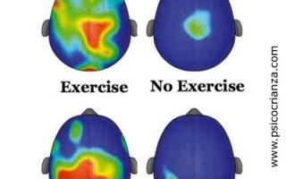 cerebro_deportes