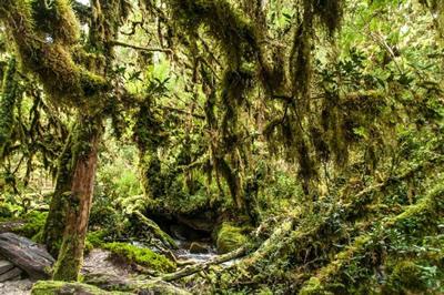 Increibles bosques