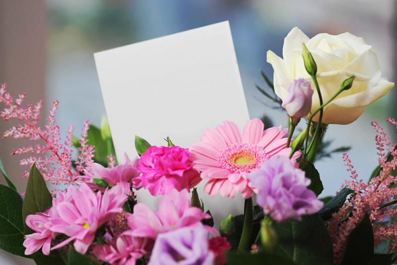 beautiful-blank-bloom-267360