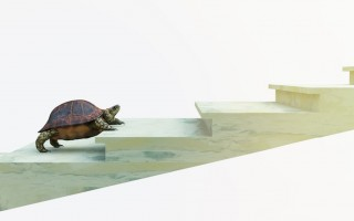 moving turtle wants to climb on the stairs concept composition
