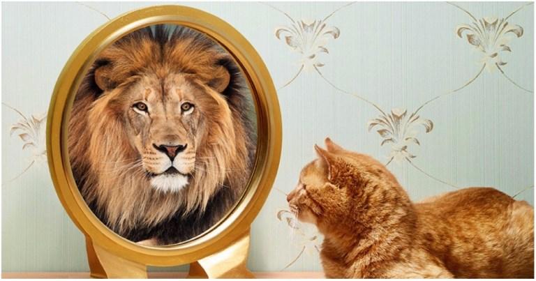 gato-león